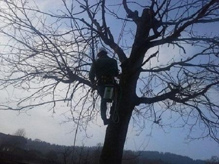 Baumkletterer bei der Arbeit